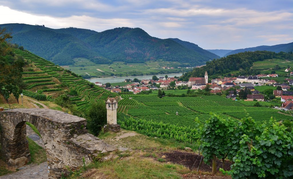The town of Spitz in the Wachau Valley amidst beautiful vineyards